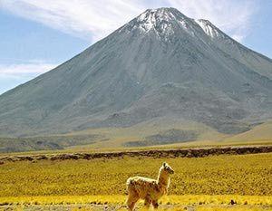 Las regiones naturales del Perú: La Puna