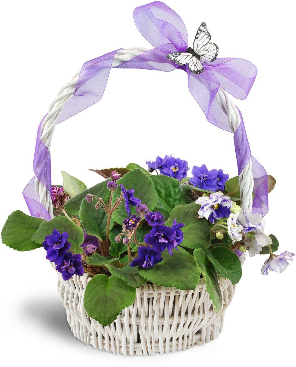 Vibrant Violets Garden Basket Prettyasapicture basket