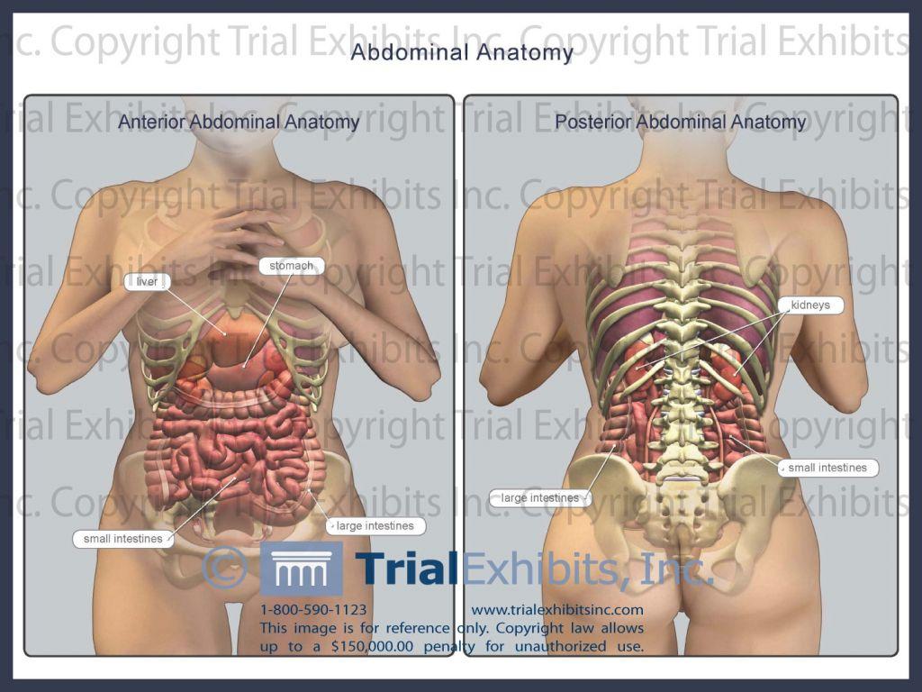 Human Body Diagram Appendix Human Body Anatomy Anatomy Human