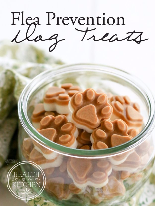 35 Homemade Pet Recipes For Dogs and Cats Dog treats