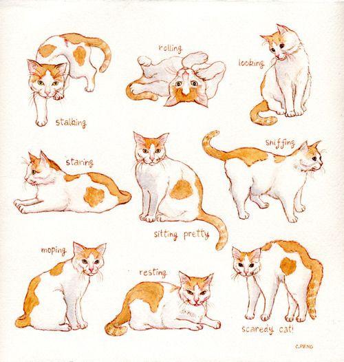 Le Chat Cat Pose Cat Art Cat Sketch