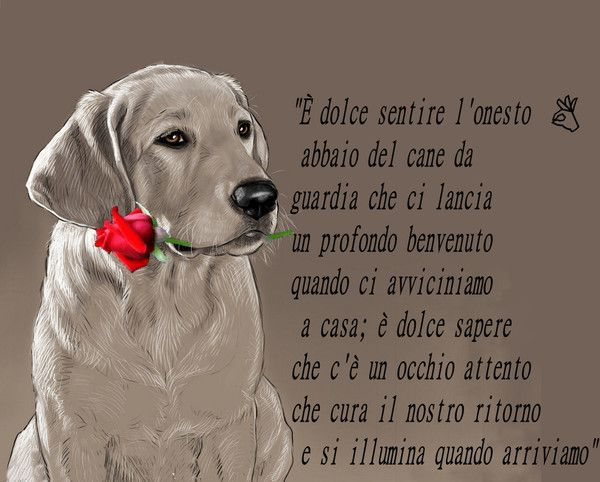 Frasi Sui Cani Da Tatuare.Le Piu Belle Migliori Frasi Sui Cani Citazioni Sui Cani Cani Humor Sui Cani