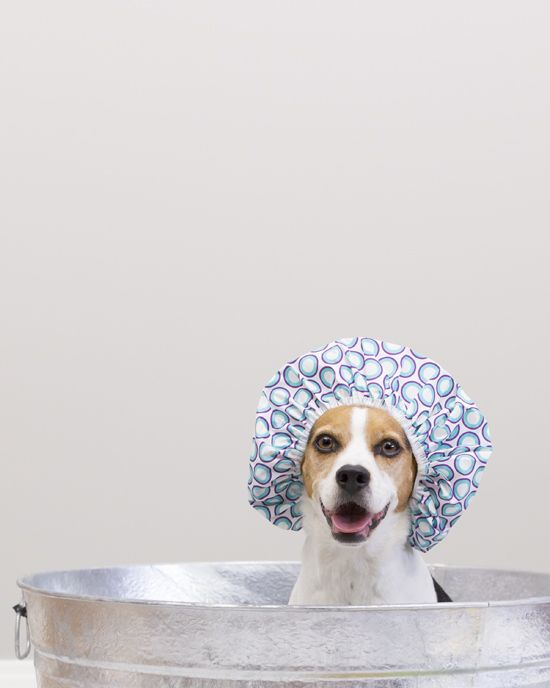 Pet Wellness How To Bathe A Dog And Have Some Fun Pawsh Magazine Studio Shop Dog Magazine Pets Dogs