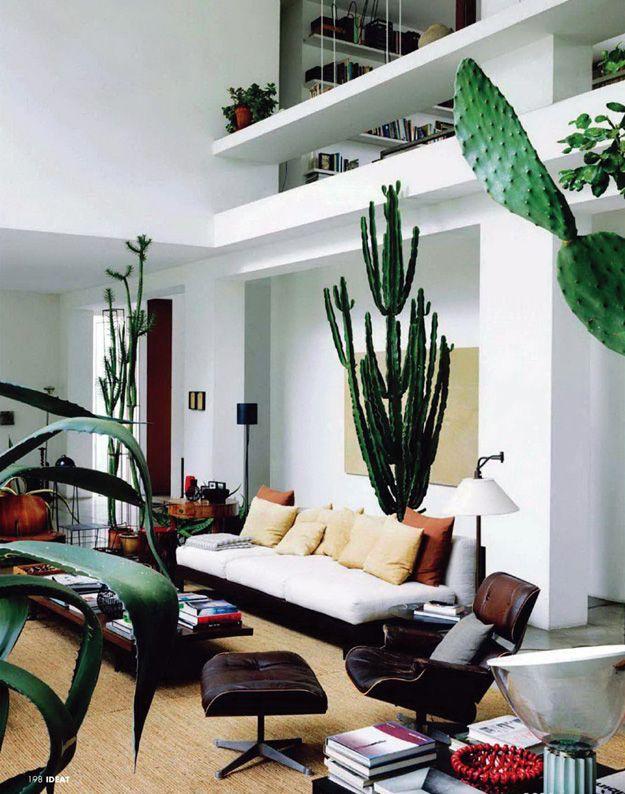 Un cactus GIGANTE adentro de la casa.