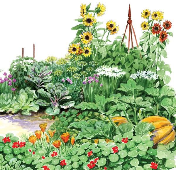GARDEN SEEDS:  A continuous, sustainable supply — no harvesting, storing or replanting required | Some crops produce seeds so readily that as long as you give them time to flower, mature and set seed, you'll always have free plants growing in your garden! Check out 34 easy, self-seeding herbs, veggies and flowers and how to manage them | #seeds #gardening