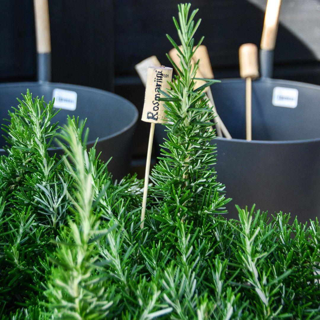 Pin By Marja Tiitto On Garden Garden Shop Herbs Garden
