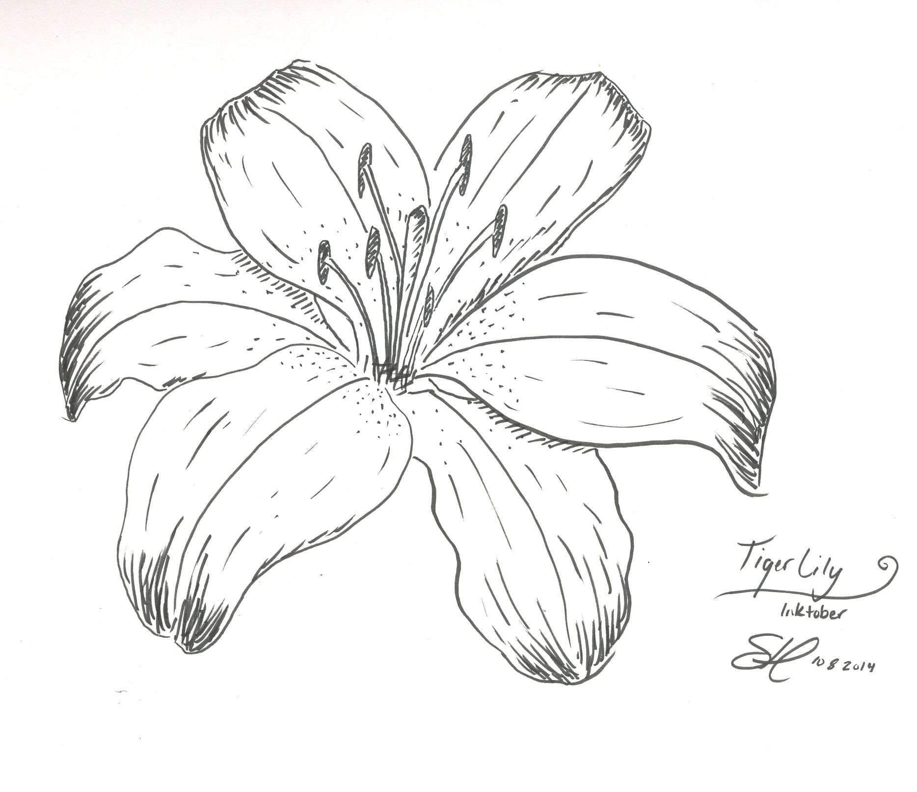 Tiger Lily Drawing #princesstigerlilydrawings # ...
