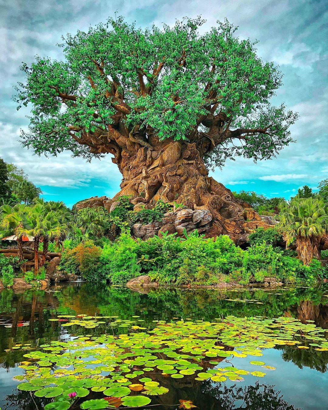 The Tree Of Life Animalkingdom Disneyanimalkingdom Treeoflife Wdw Iphonephotography Iphonepic Iphone Photography Tree Of Life Outdoor