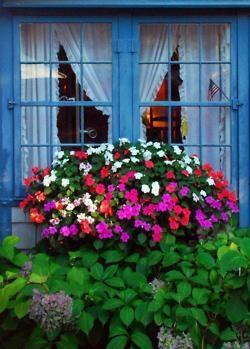 Beautiful windowbox of impatiens!