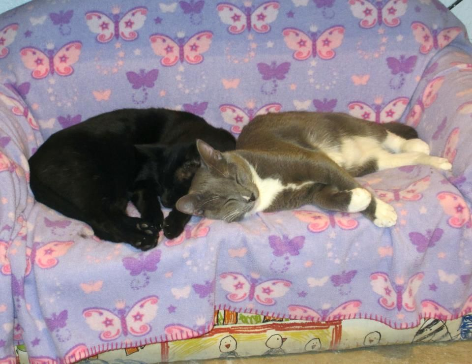 Nighty-night by TipToe and Pickles.  #nightynight #cookiesplace #shadowcatsrescue #cats