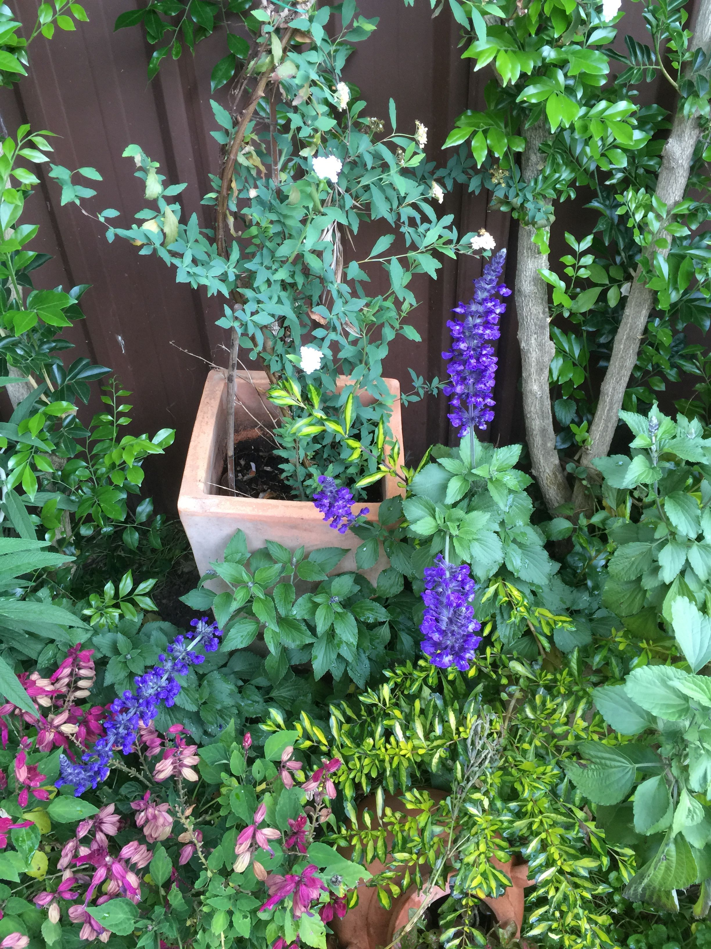 Pin by Bells Me on Small garden ideas #sydney   Small ...