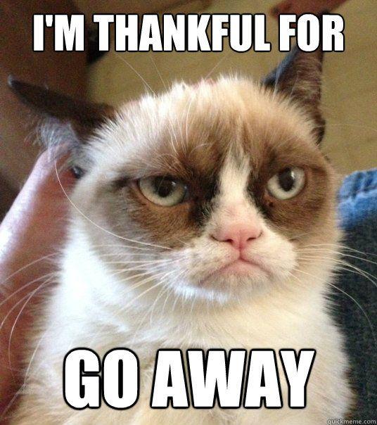 d648600554a6de1b81a5650a4eb9861f thankful meme funny google search grumpy cat brilliance