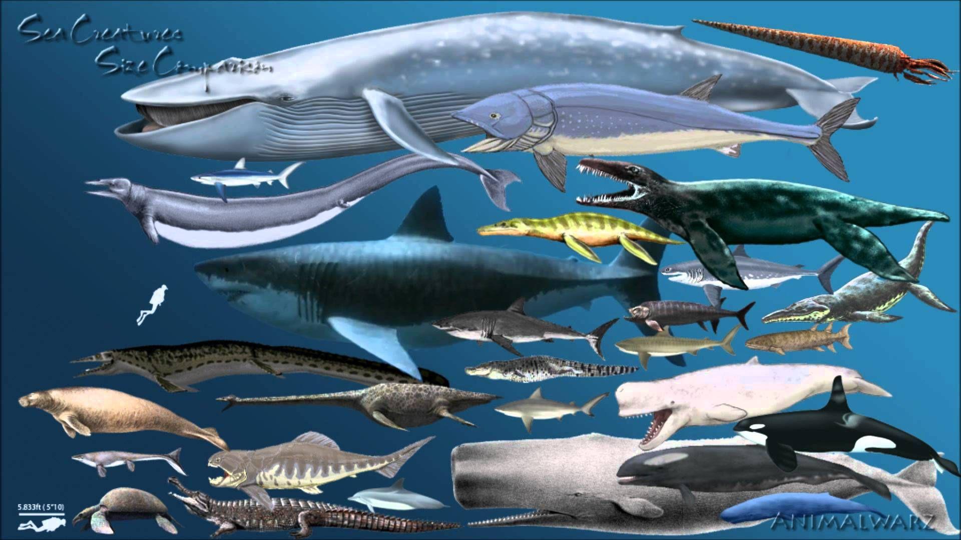 blue whale size - HD1920×1080