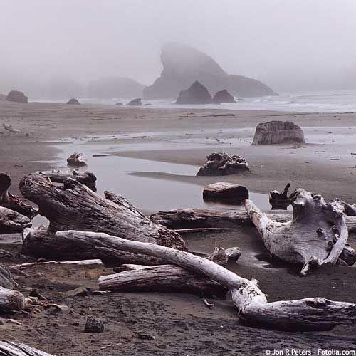 Bois flott bois flott pinterest bois le mer et plage for Travailler bois flotte