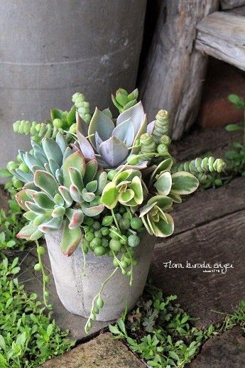 フローラのガーデニング・園芸作業日記-寄せ植え 多肉植物