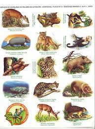 Resultado De Imagen Para Laminas De La Fauna De La Costa Peruana Costa Mimi