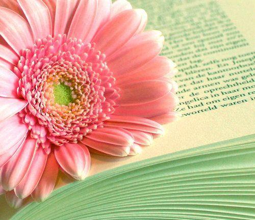 pink daisy. my favorite