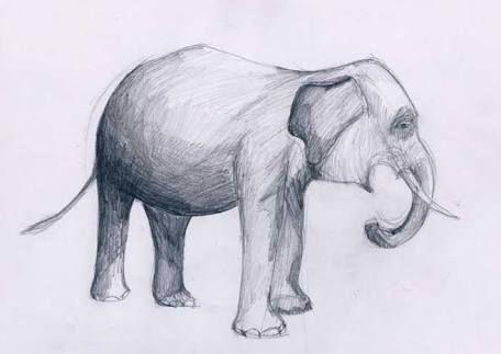 Gambar Sketsa Hewan Dengan Pensil Penelusuran Google Art Moose