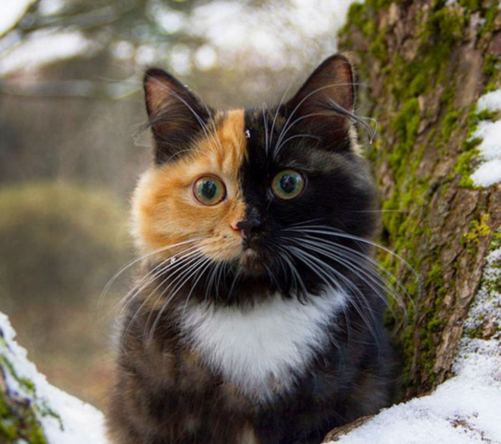 He Two Face Cat Instagram Or Climbing Trees To Get A Better Look At The World Yana The Two Face Cat Instagram Apparently Pretty Cats Cute Animals Cute Cats