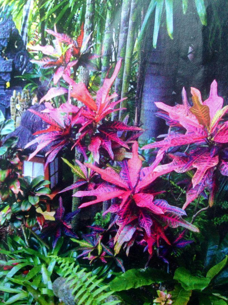 Tropische Gärten ...  #garten #tropische #tropischelandschaftsgestaltung Tropische Gärten ...  #garten #tropische #tropischelandschaftsgestaltung