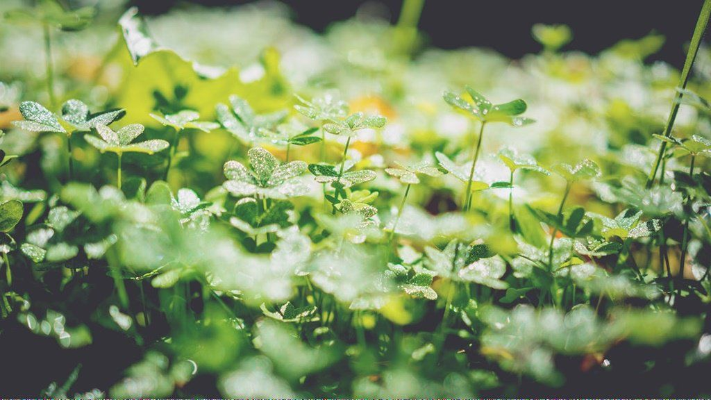Organic Gardening Encyclopedia Organicgardeningathomeindia