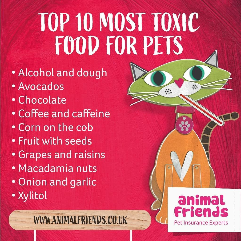 Here Are The Top 10 Most Toxic Food For Pets Always Be Sure To Keep An Eye On What Your Pet Is Eating Topten Protectyourpe Your Pet Pets Animal Infographic