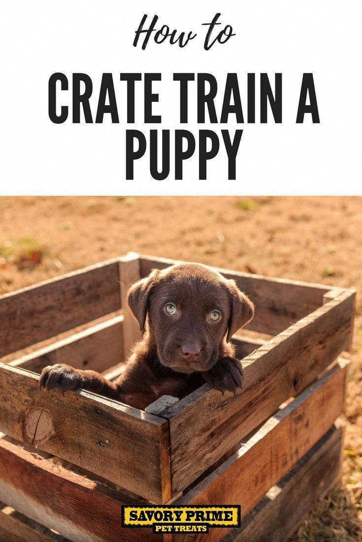 How To Crate Train A Puppy Train That Puppy Puppies Dog