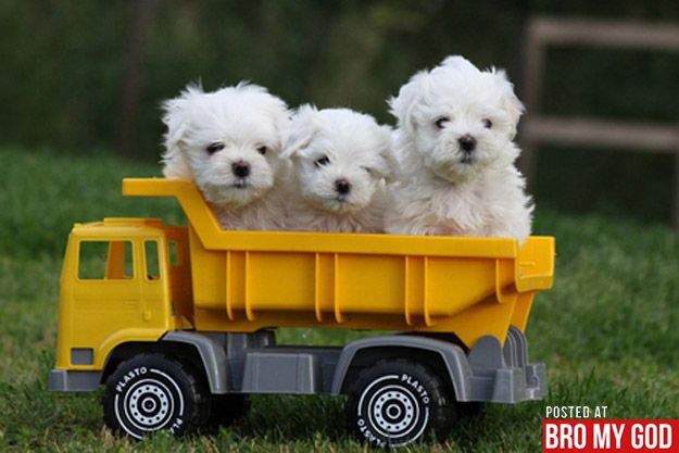 I Want This Order Puppies I Love Dogs Tiny Dogs