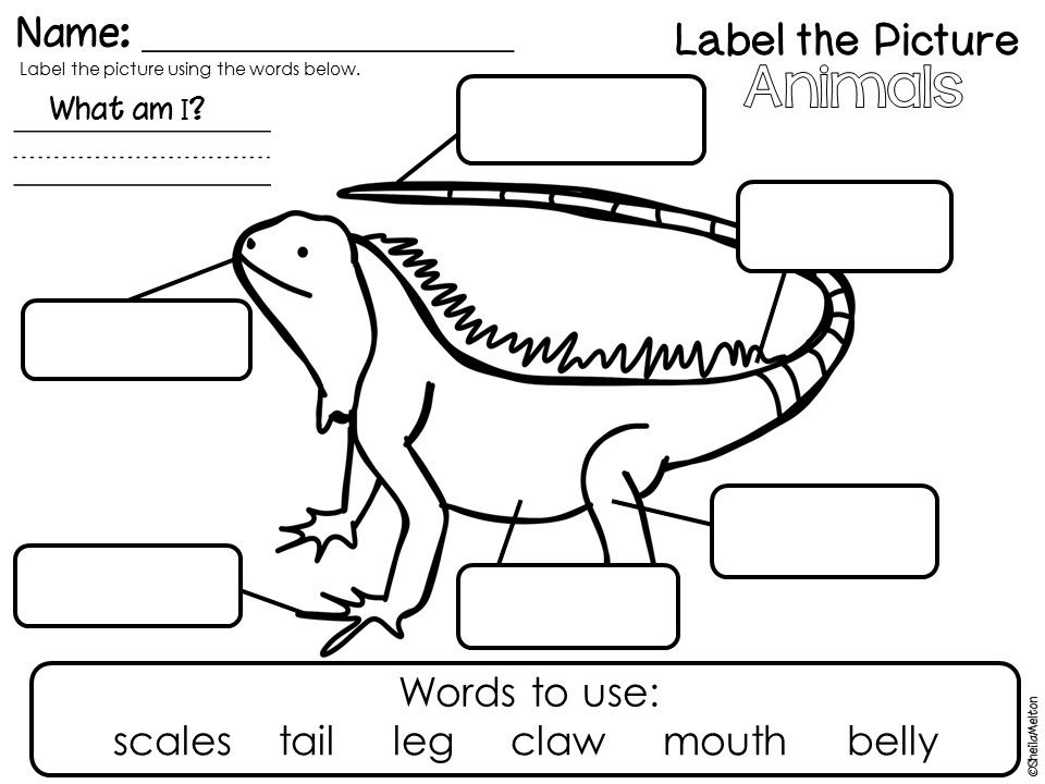 Animals Label the Picture FREEBIE (Characteristics