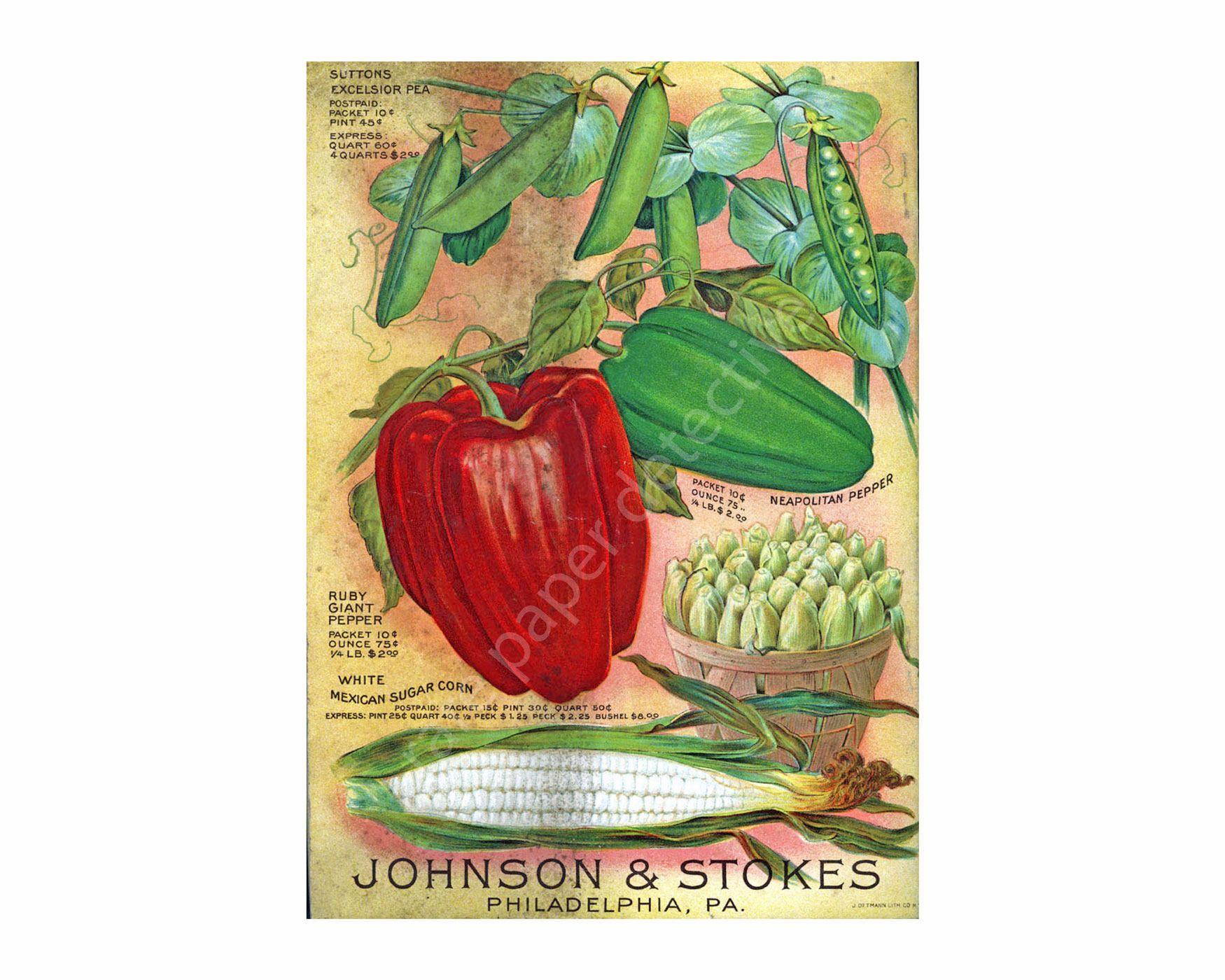 Vegetable Garden Seed Catalog Print, 5 x 7, Vintage 1898 Greenhouse ...
