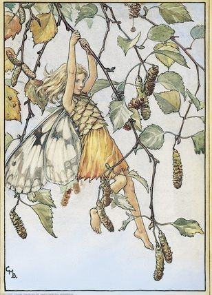 Illustration for the Silver Birch Fairy from Flower Fairies of the Trees. A girl fairy swings from the branches of a silver birch tree which is covered in catkins.  										   																										Author / Illustrator  								Cicely Mary Barker
