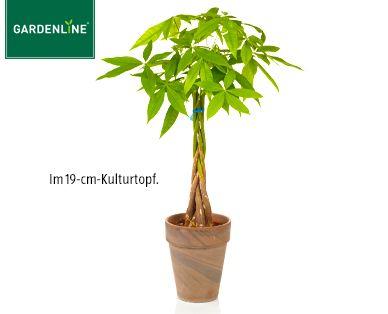 Gardenline Pflanzenraritat Gardenline Pflanzen Aldi Werbung