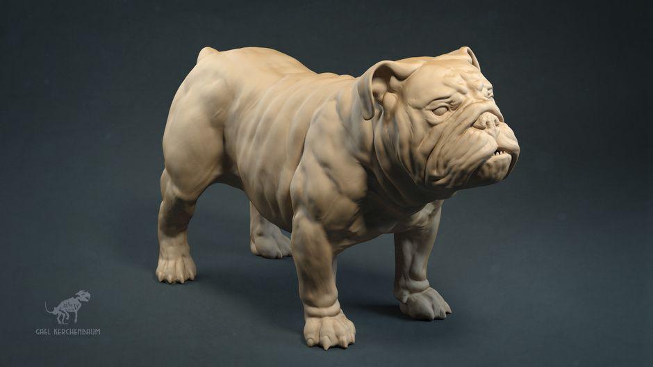 English Bulldog Anatomy Study by gael kerchenbaum | Creatures | 3D ...