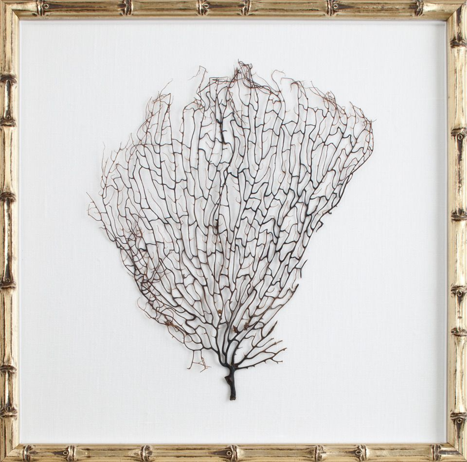 Natural coral sea fan floated on oyster linen and finished in a this lovely wall art features natural coral sea fan in a champagne bamboo frame the sea fan is matted on an oyster linen mat and covered with glass amipublicfo Images