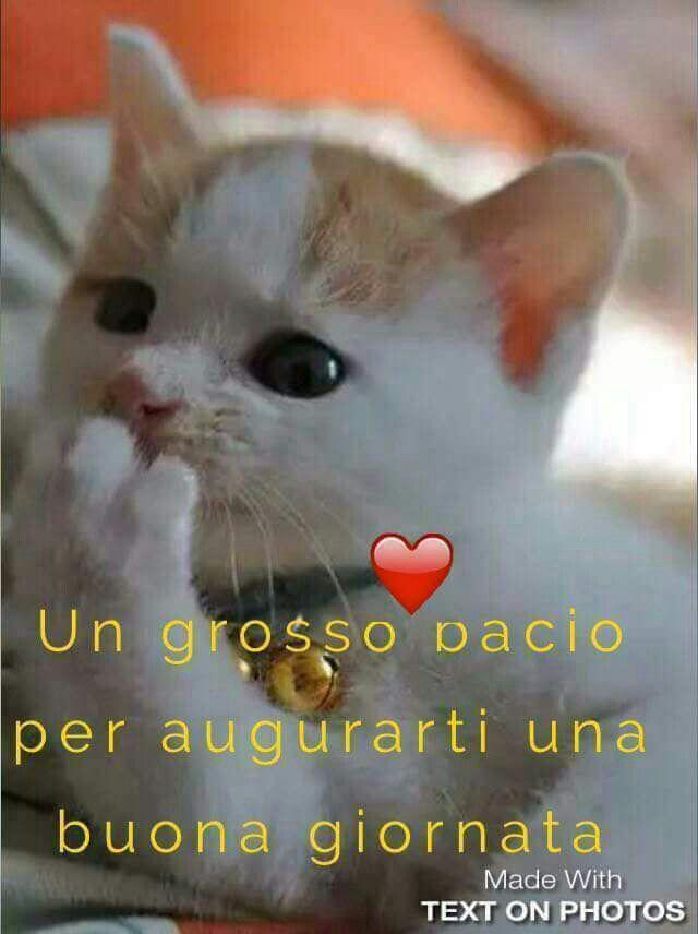 Pin ad ugat de viorica alb pe saluturi it pinterest for Buongiorno con gattini