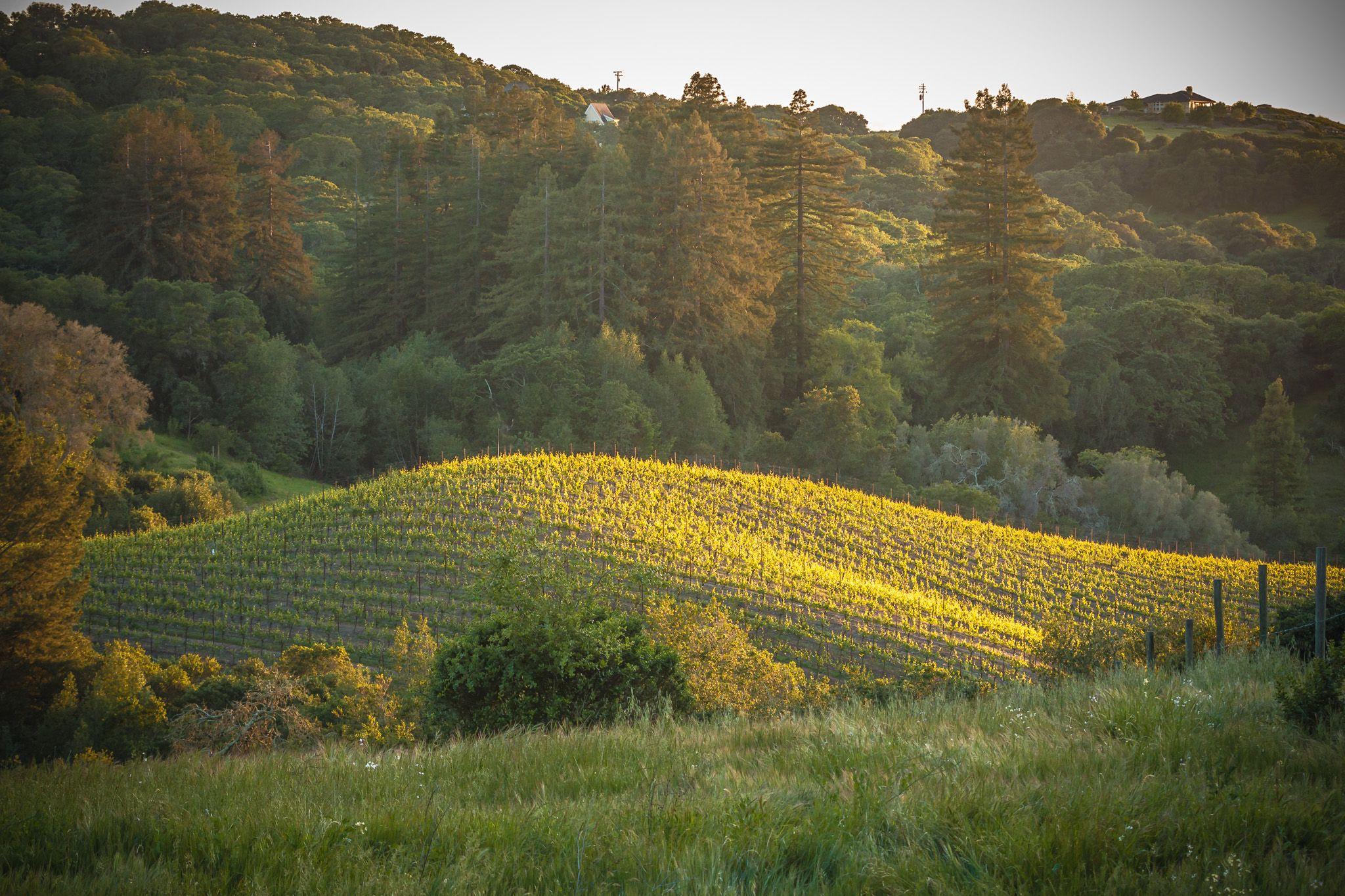 Vineyards - Wineroutes.com by Grapexchange.com