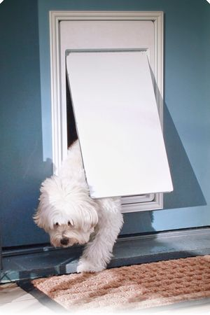 Our Doorman Works Seamlessly With Your Pet S Invisible