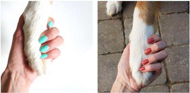 #nails #nailpolish #dog #beauty