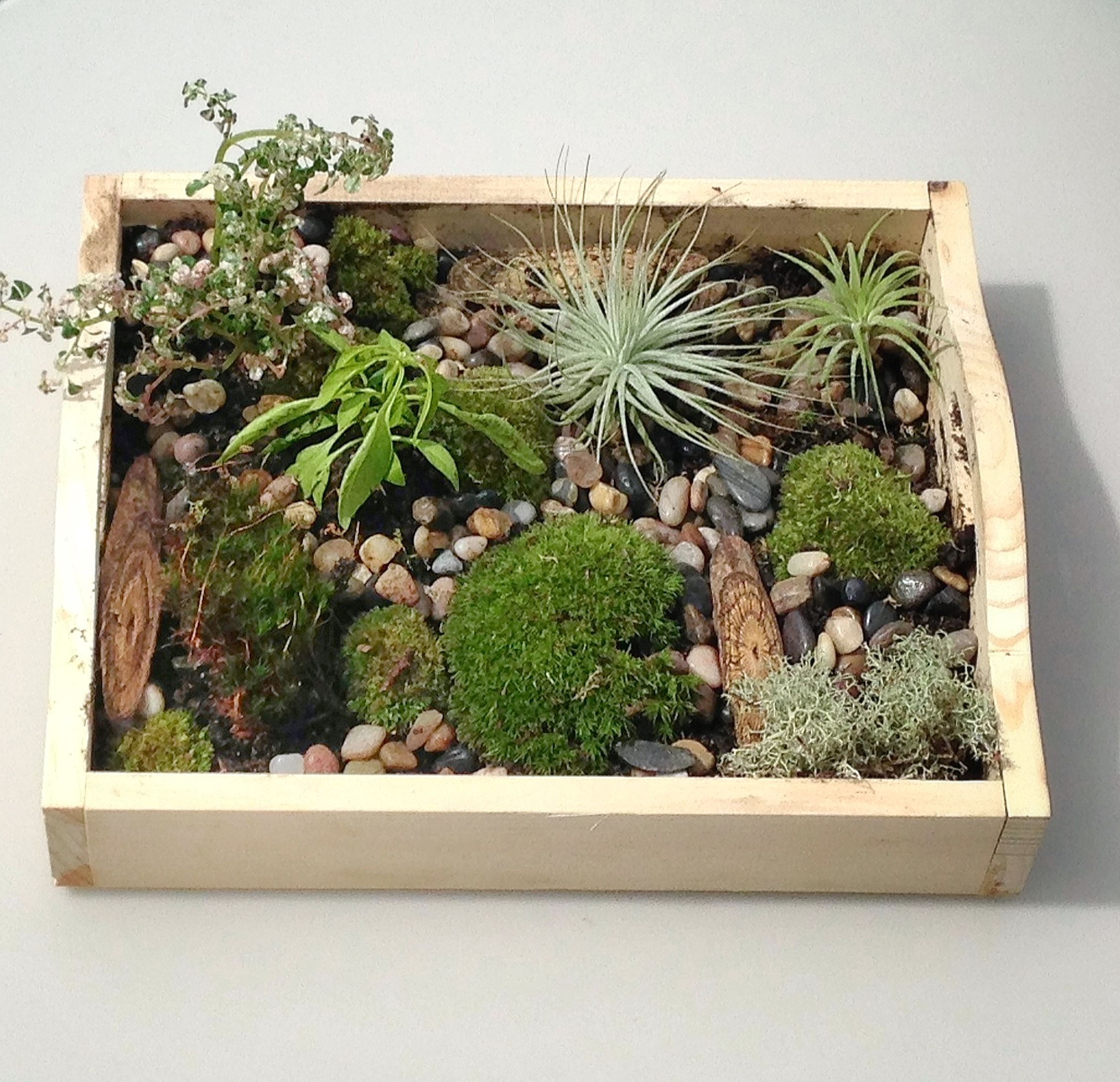 The Tray, Air Plants, Live Moss And