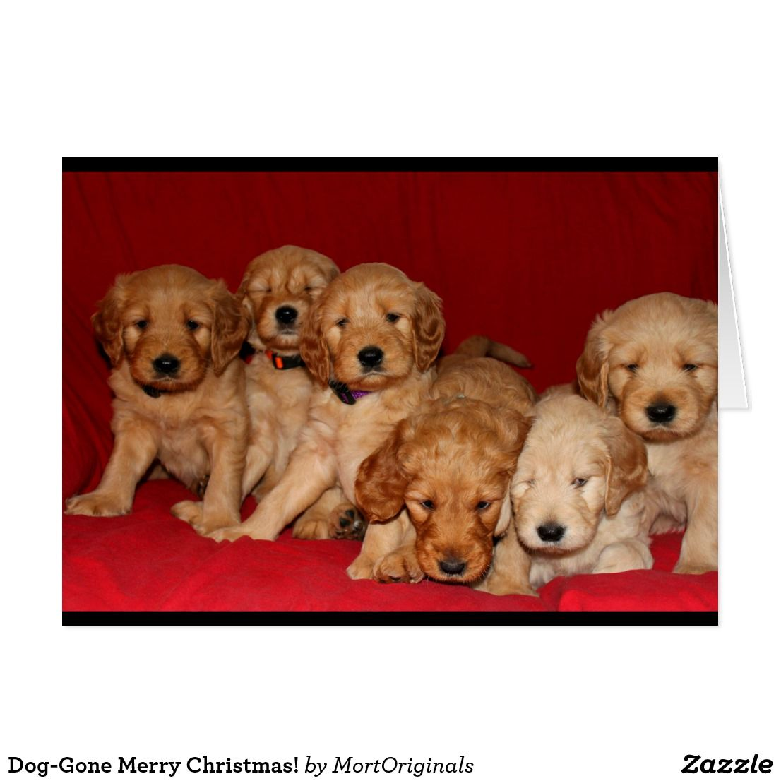 Doggone merry christmas holiday card with