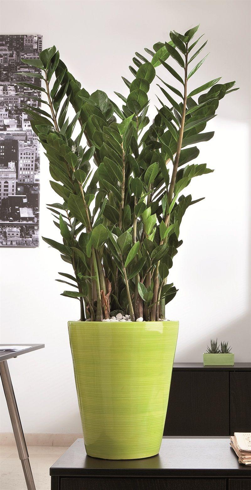 Pianta Da Ufficio Poca Luce arredare con le piante nel 2020 (con immagini) | arredare
