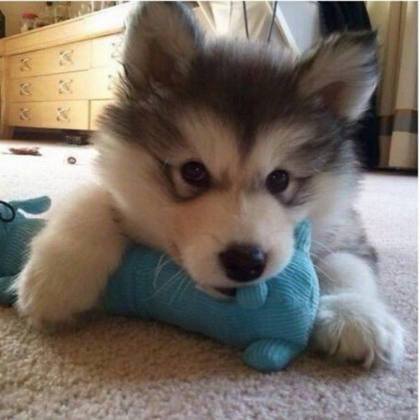 Brand New Baby Kohbi And His Favorite Toy Cute Animals Cute