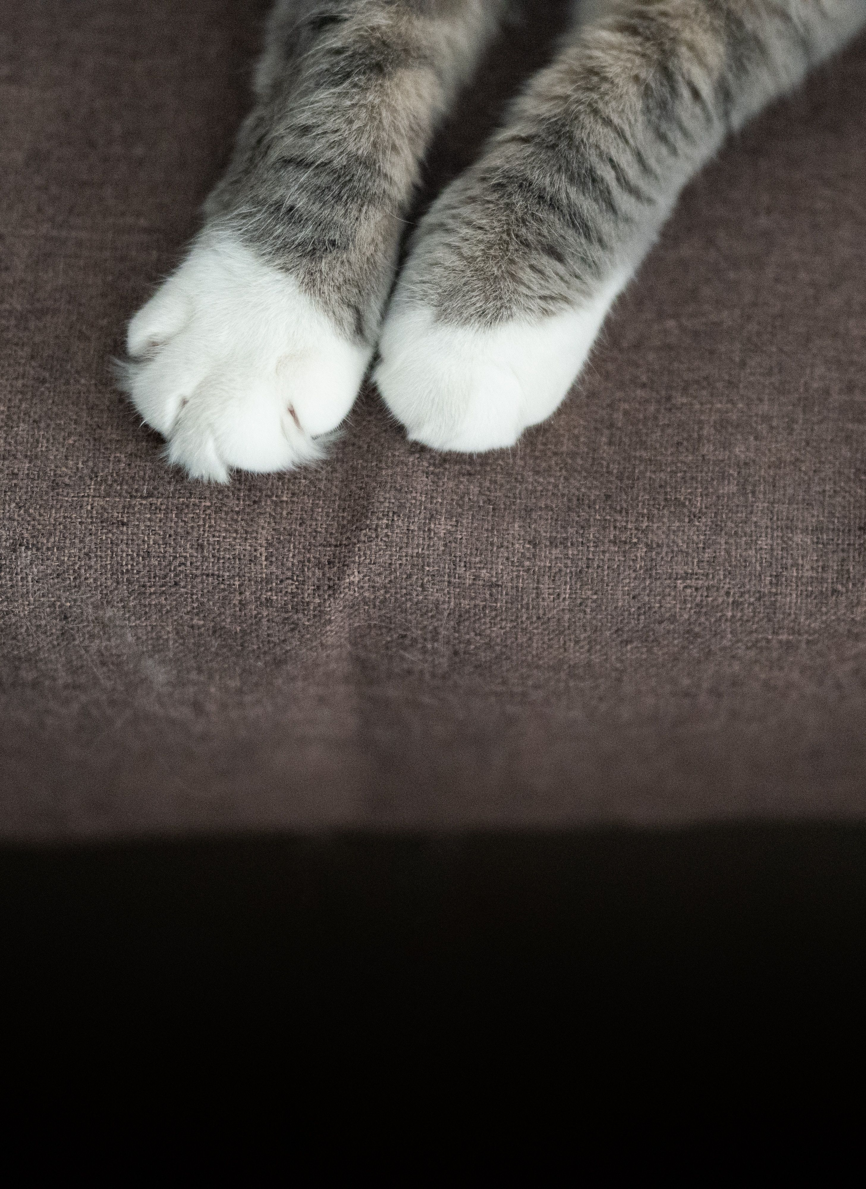 Sony Ilce 7m3 Eef2f0 Cat Diseases Cat Health Cat Health Problems