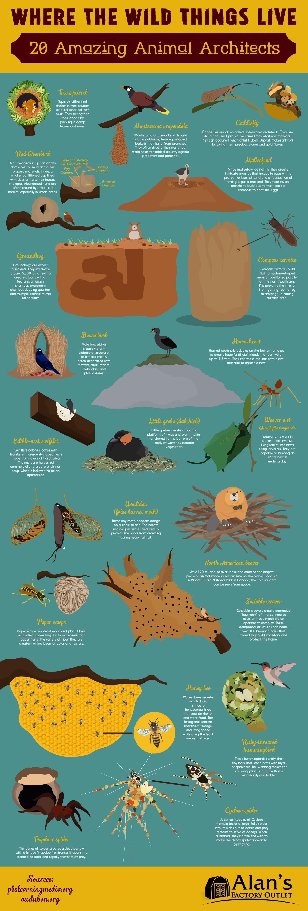 Where the Wild Things Live: 20 Amazing Animal Architects #Infographic