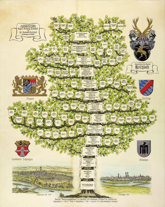 stammbaum hirschbold  stammbaum stammbaum erstellen