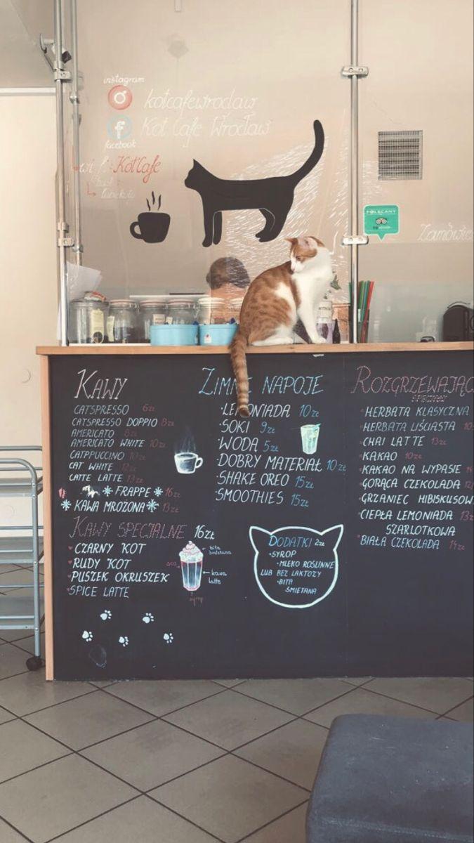 Cat Cafe In 2020 Cat Cafe Bookstore Design Cafe Design