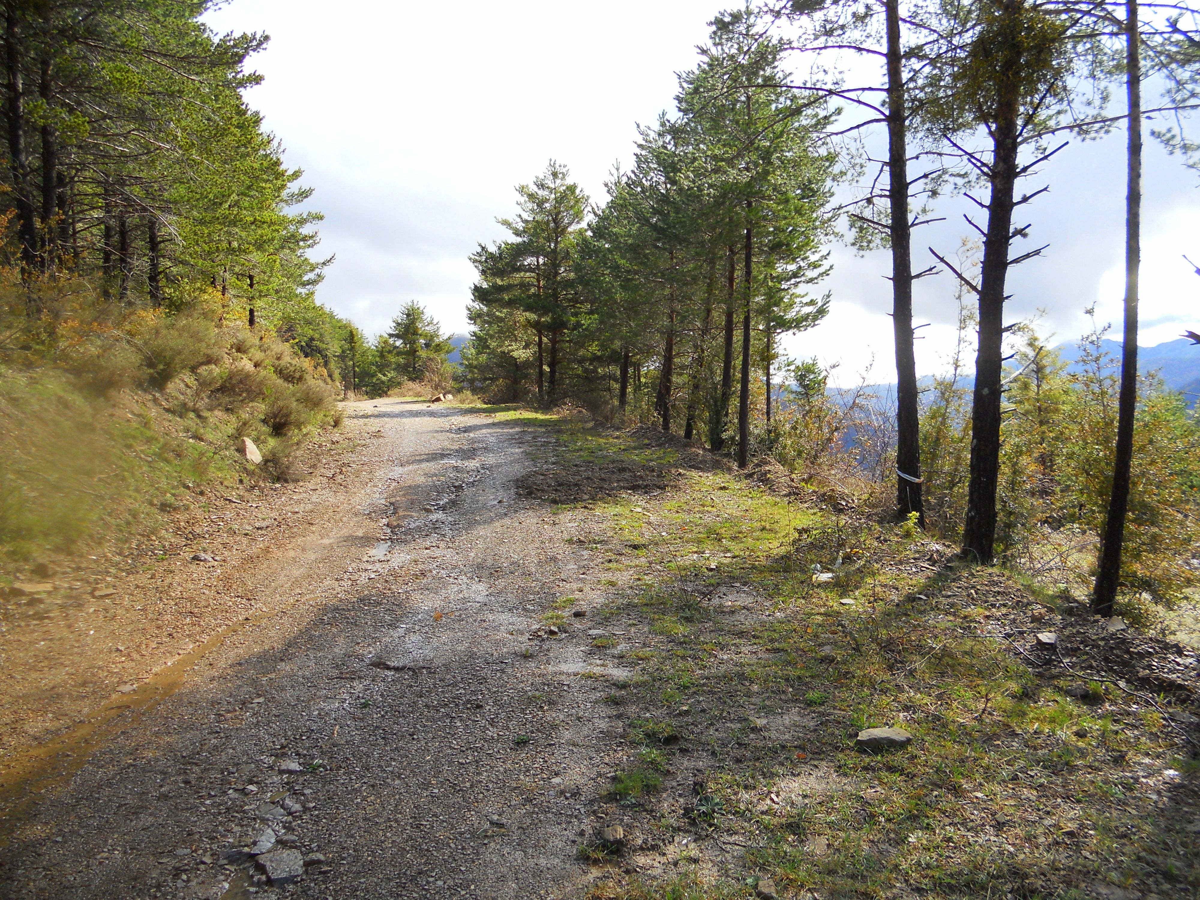 El sendero enlaza con una pista, por la que seguimos ascendiendo