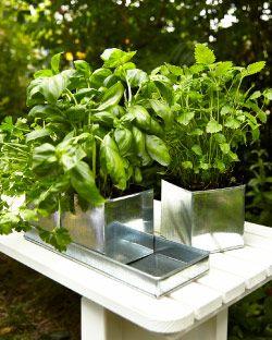 fr er kr utermix in verzinkten blument pfen auf einem tablett ikea outdoor 2015 sommer. Black Bedroom Furniture Sets. Home Design Ideas