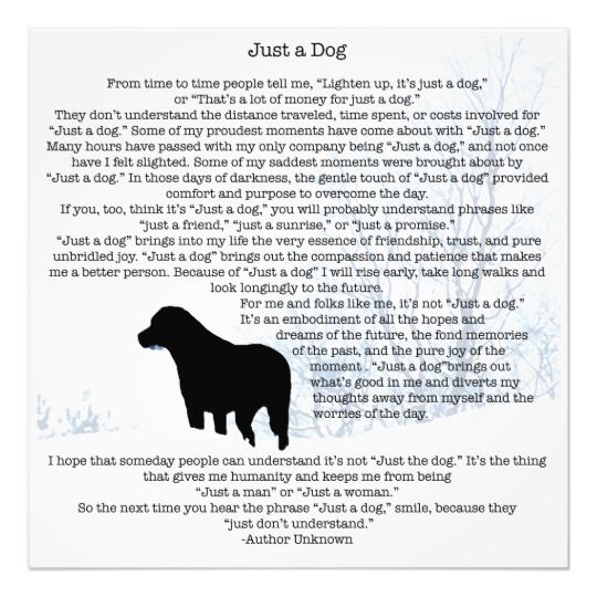 Just A Dog Quote - Black Labrador Photo Print