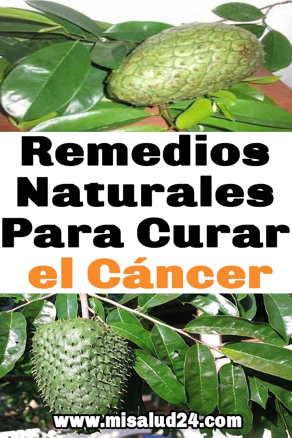 Remedios Naturales Para Curar El Cáncer Cáncer Remedios Plant Leaves Health Plants